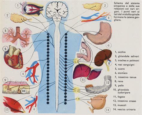 anatomia corpo umano organi interni dia banca dati di immmagini