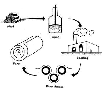 How Do You Make Paper From A Tree - how to make paper from a tree priory press ltd