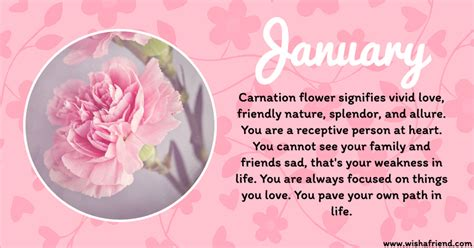 carnation color meanings your birth flower is january