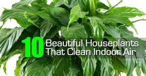 Beautiful House Plants 10 beautiful houseplants that clean indoor air
