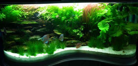 Fish Tank Aquascape Designs by Aquascaping Aquascaping Mentone Aquarium The Lush