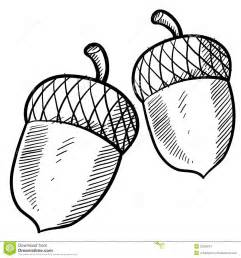 acorn sketch stock image image 22526081