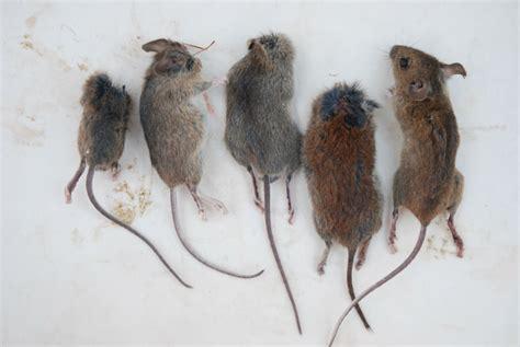 huis muis muizen muizen en nog eens muizen logboek