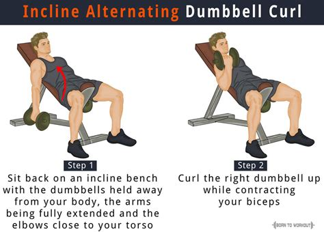 sit up bench benefits incline dumbbell curl how to do benefits forms video