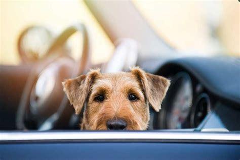 Hund Im Auto Transportieren by Hunde Sicher Im Auto Transportieren Garantiert Sicher
