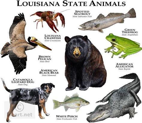 louisiana state colors louisiana state animal louisiana state animals
