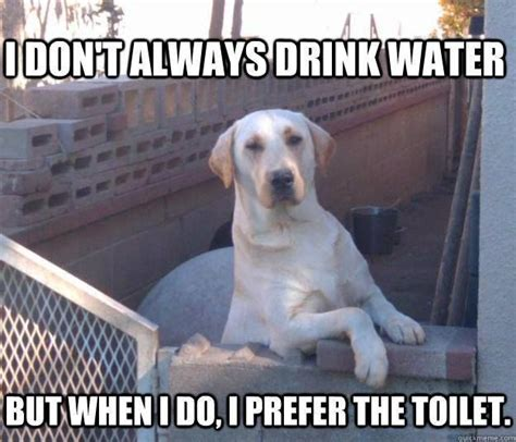 water memes images  pinterest funny stuff