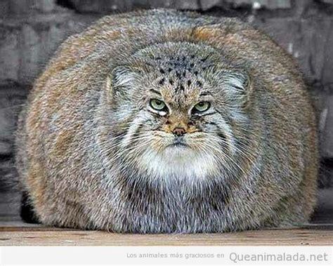 imagenes comicas de animales fotos graciosas de animales animales graciosos holidays oo