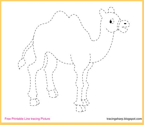 printable tracing pictures download free printable camel line tracing drawing