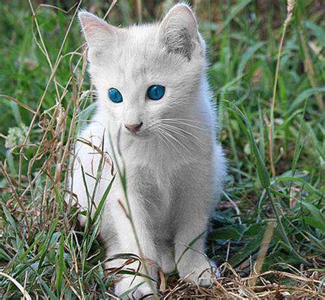 imagenes de animales albinos fotos animales albinos