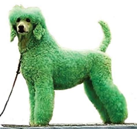 dogs with green 1000 images about bad hair day on tina turner and setters