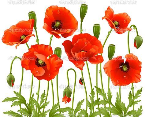 google images poppies poppies amapolas buscar con google poppies amapolas