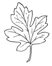 maple leaf coloring page free maple leaves coloring pages