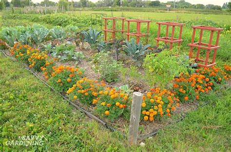 in vegetable garden 5 ways to spice up your vegetable garden this year