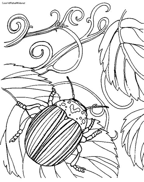 japanese beetle coloring page beetle coloring page getcoloringpages com