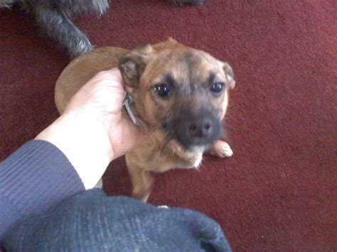 cross breed dogs 2 cross breed dogs looking for a forever home feltham middlesex pets4homes