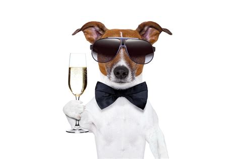 happy new year puppy happy new year chagne new year chagne glass sunglasses hd wallpaper