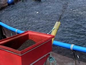alimentadores ocea ocean vision group your aquaculture and marine technology
