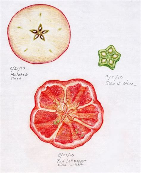 fruit 5th botany 5th grades and fruit seeds on