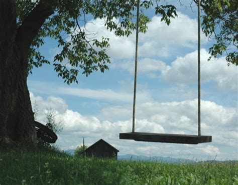 tree and swing how to plant a tree the right way neave landscaping