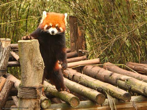 St Pandablack quot black metal panda quot t shirts hoodies by colin wren redbubble