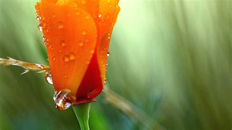 beautiful orange beautiful orange flower 19334 1920x1080 px hdwallsource com