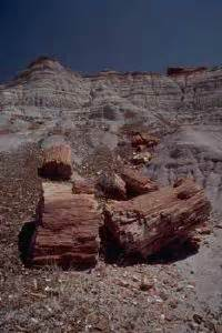 buried treasure the gillespie collection of petrified wood books petrified forest national park a traveler s guide
