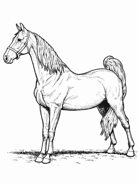 coloring pages of horses and ponies horse coloring pages coloringpages1001 com