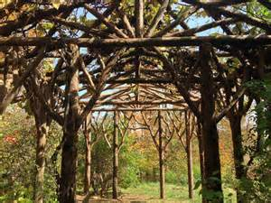 Grapevine Pergola by Grapevine Arbor Related Keywords Amp Suggestions Grapevine