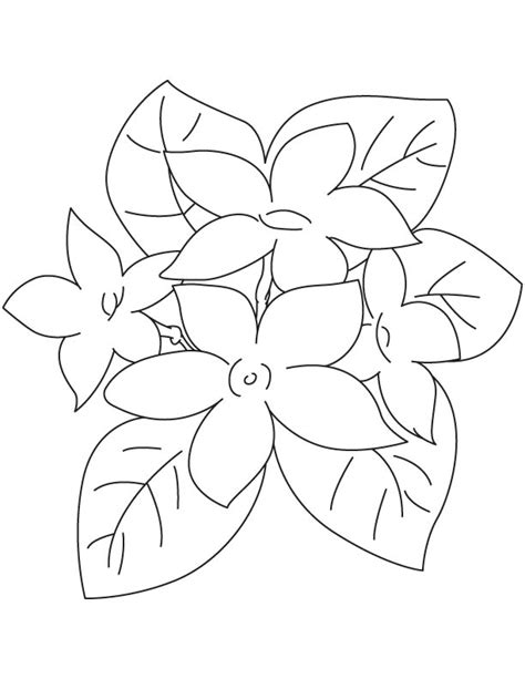coloring pages of jasmine flower jasmine flower coloring page download free jasmine