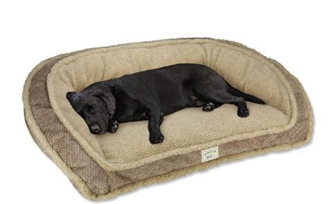 tempurpedic dog bed pin by katie white on animals