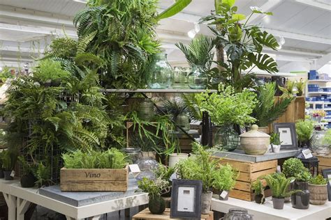 houseplants   resurgence  younger generation gca
