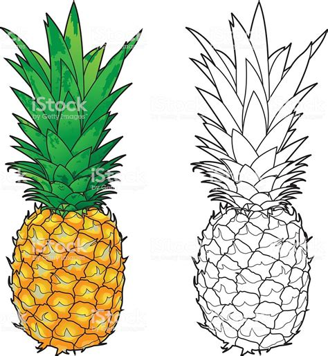 pineapple color pineapple line color stock vector more images of