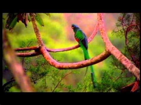 imagenes de animales y plantas de mexico flora y fauna en peligro de extinci 243 n youtube