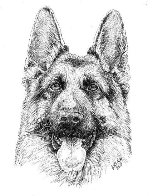 Cartoon German Shepherd Puppy Coloring Page Coloring
