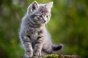 haus katze katzen aus dem tierheim katzenliebhaber