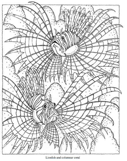 sea life coloring page coloring pages adult coloring