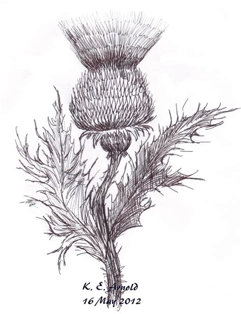 thistle drawn with an ink pen by kearnold on deviantart