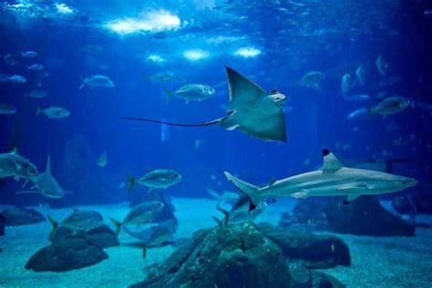 Oriental Bedroom Ideas related keywords amp suggestions for oceanarium lisbon portugal
