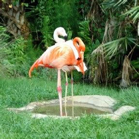 Baby Pink Flamingo a pink flamingo baby shower