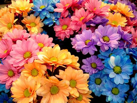 ci fiori ᐅ le migliori immagini di fiori per whatsapp 105 top