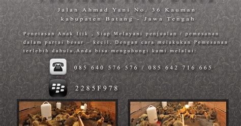 Jual Bibit Itik Petelur Di Makassar sektor ternak jual anak bebek itik day duck