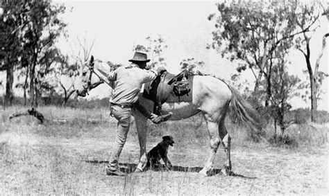 file statelibqld 1 113072 bushman with his dog and horse file statelibqld 1 180751 stockman prepares to mount his