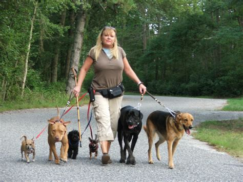walking service loving touch pet sitting and walking service