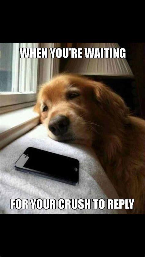 waiting   crush  text  animals dogs