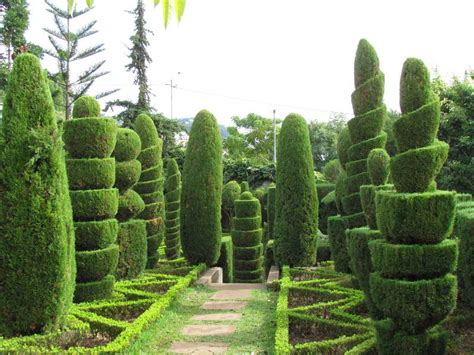 16 marvellous topiary ideas topiary gardens and garden ideas