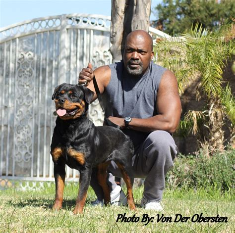 rottweiler breeders in southern california rottweiler breeders california breeds picture