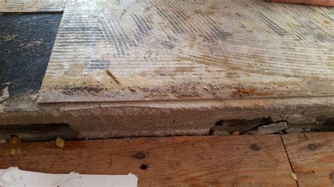 asbestos vinyl flooring removal cost thefloors co
