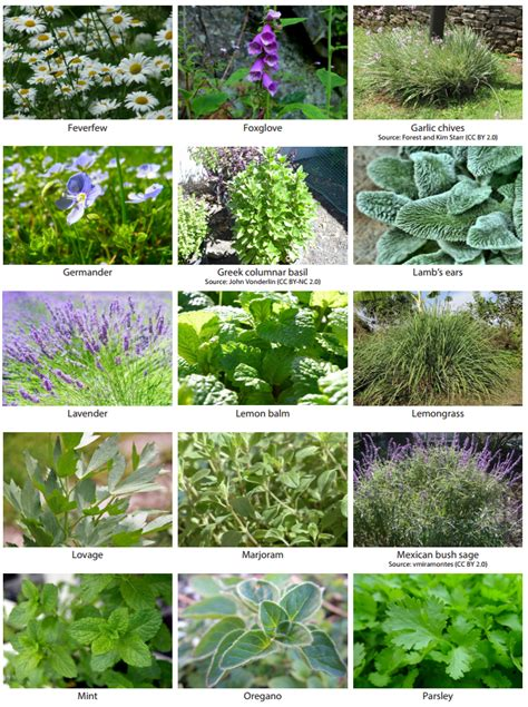 types of garden herbs how to grow herbs for landscapes growing herbs