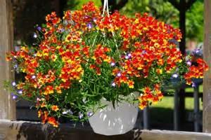 fleurs plantes et jardins photos ezkrima